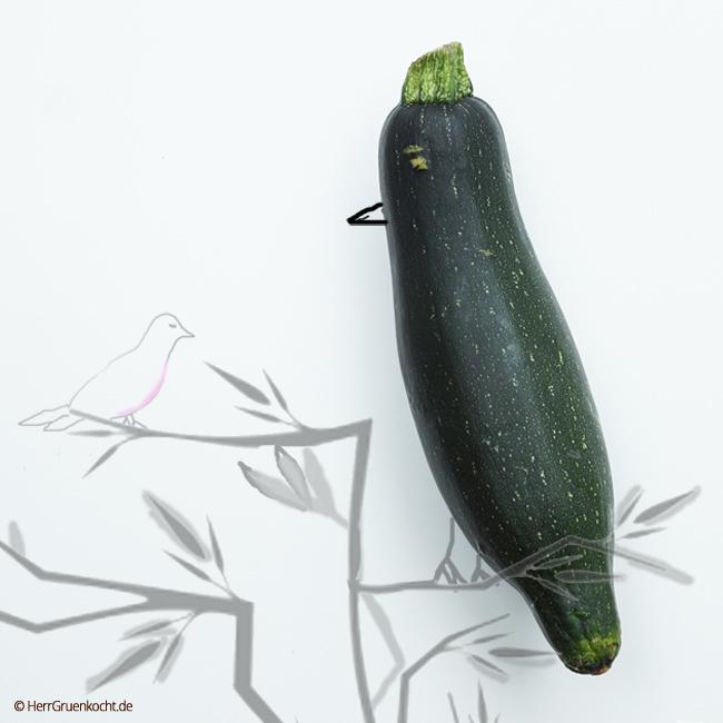Zucchini-Vogel