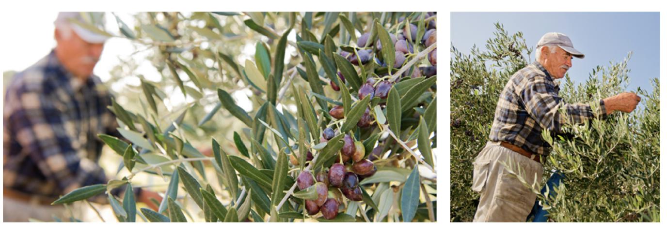 Warum ich MANI mag – Bio-Olivenöle, Bio-Oliven und -Mezes in hervorragender Qualität